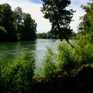 River near Corvallis