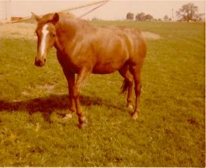 My horse Patsy