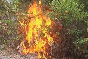 sleeper-brush-fire-volusia-lightning-0509